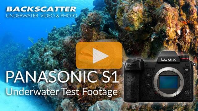 Panasonic Lumix S1 | 4K 60p Test Footage | Little Cayman 2019