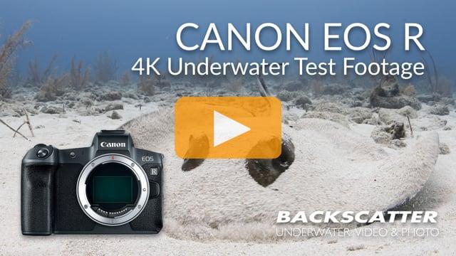 Canon EOS R | Underwater Test Footage | 4K 30p