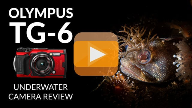 Olympus TG-6 Underwater Camera Review
