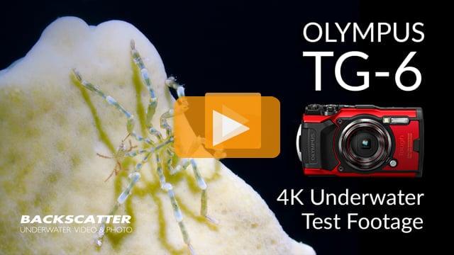 Olympus TG-6 | 4K 30p Underwater Test Footage | Little Cayman 2019