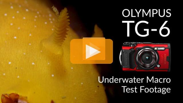 Olympus TG-6 | First Dive Underwater Macro Test Footage