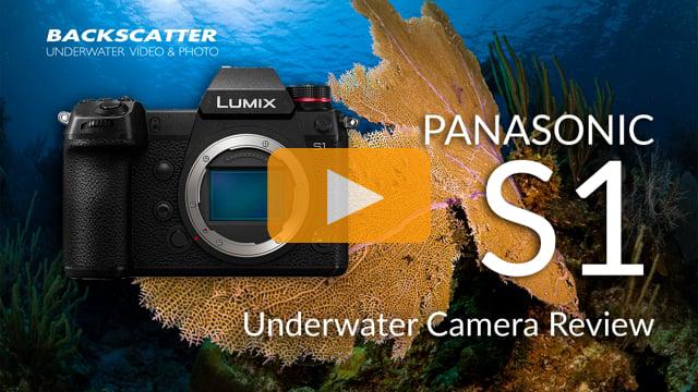 Panasonic S1 | Underwater Camera Review