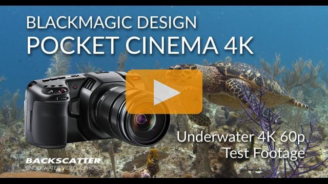 Blackmagic Design Pocket Cinema Camera 4K (BMPCC4K) | 4K 60p Underwater Test Footage