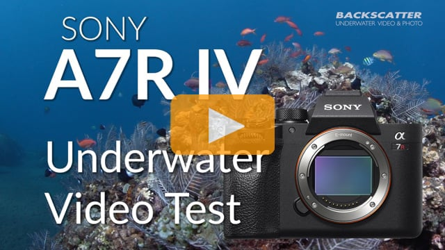 Sony A7R IV | Underwater Video Test Footage