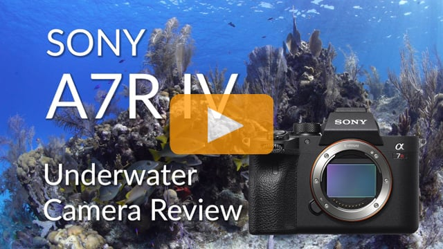 Sony A7R IV Underwater Camera Review