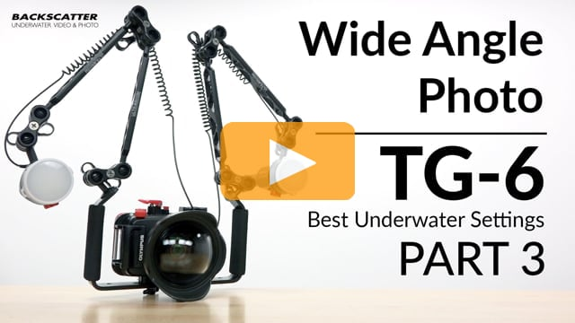 Olympus TG-6 | Best Underwater Camera Settings | Part 3 - Wide Angle Photo