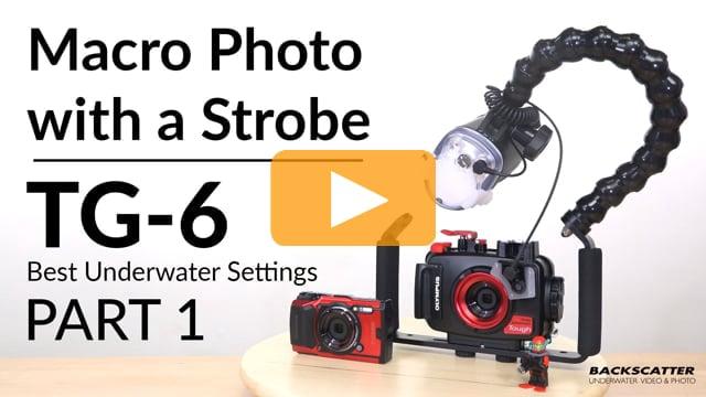 Olympus TG-6 | Best Underwater Camera Settings | Part 1 - Macro Photo with a Strobe