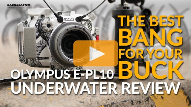 Olympus EPL-10 | Underwater Camera & Housing Review