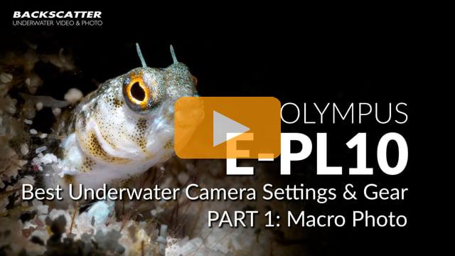 Olympus E-PL10 | Best Underwater Camera Settings | Part 1 - Macro Photo