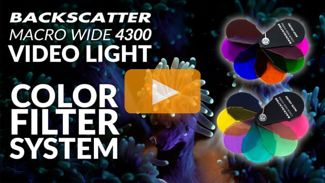 Backscatter Macro Wide 4300 Video Light MW-4300 | Color Filter System Underwater Test Footage