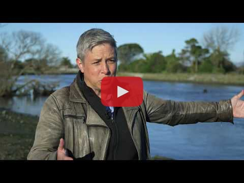 Video of Kristina Hill on coastal adaptation