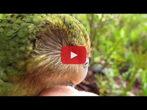 Sirocco video