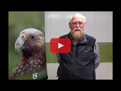 Video: Introducing the Recovering Native Birds stamp series