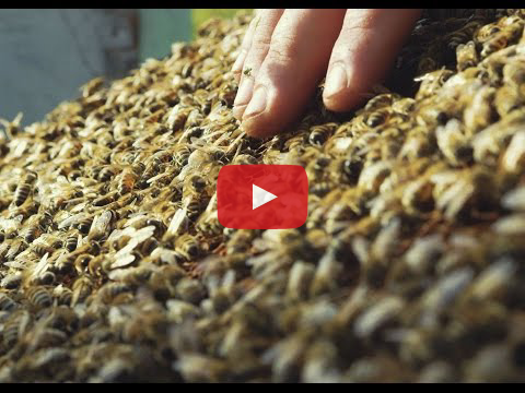 Munro Honey & Meadery