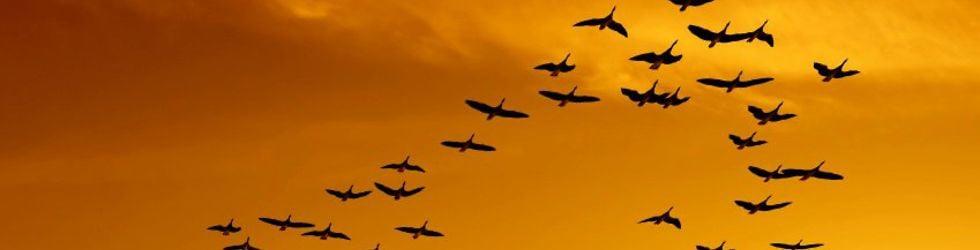 BIRDS AUDITIONS