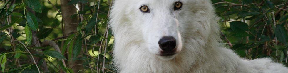 Wolfwatcher