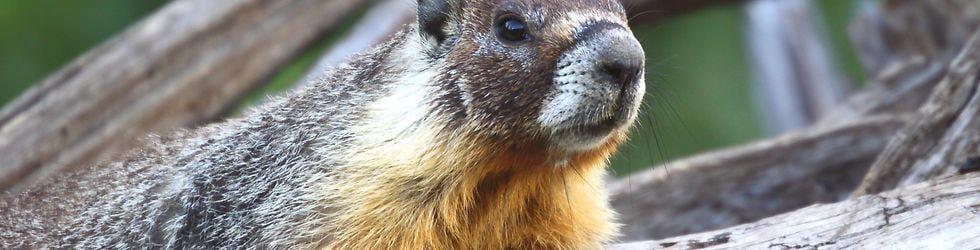 Beginner - Intermediate Wildlife Videographers