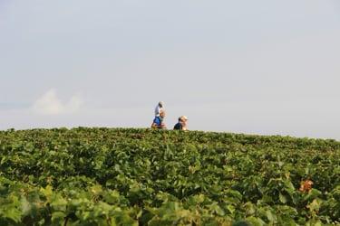 Wine & Culinary Tourism Worldwide