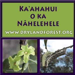 2013 Ka'ahahui o ka Nāhelehele Dryland Symposium, Kailua-Kona.