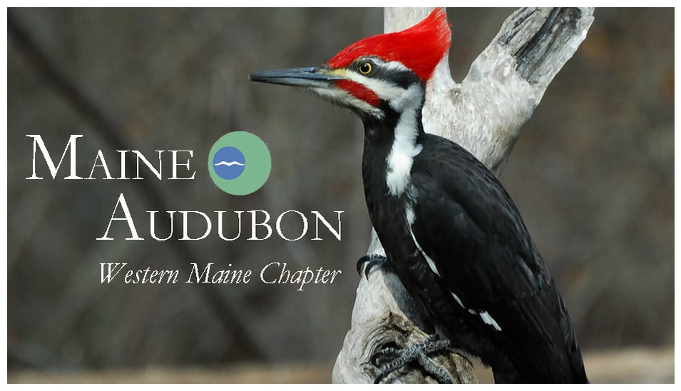 Western Maine Audubon