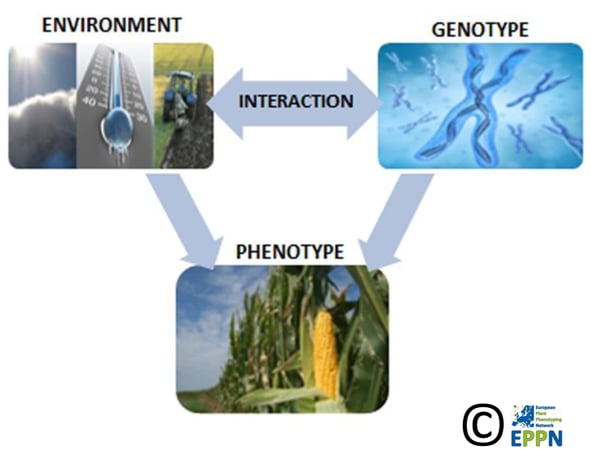 Plantohenotyping Symposium 2015