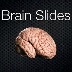 Profile picture for Brain Slides