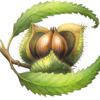 Chestnut School of Herbs