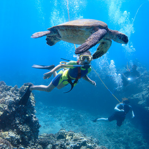 Profile picture for Maui Snorkeling