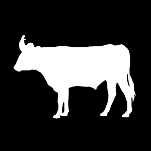 Profile picture for Beef & Sage
