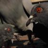 Pigeonlover