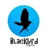Blackbird Film Fest