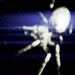 ▲Bipolar Spider▲