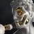 Zebra_Studio