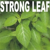 strong leaf entertainment