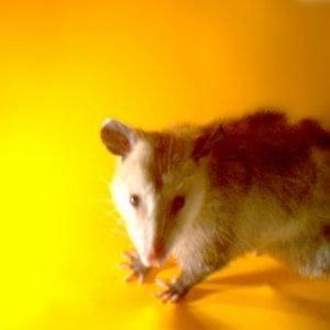 Profile picture for animal detectors