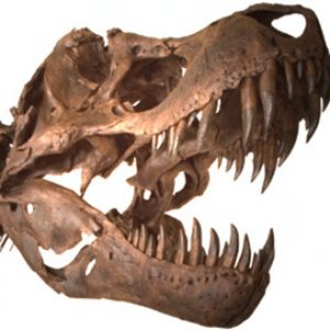 Profile picture for HMNS