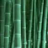 bambupictures.com