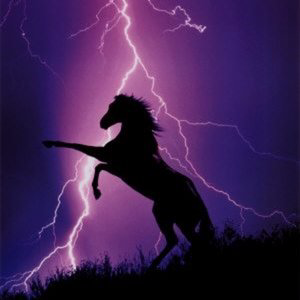 Profile picture for Thunder Horse Video