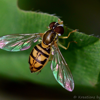 Hoverfly Technologies, Inc.