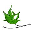 Leafbranch Studios