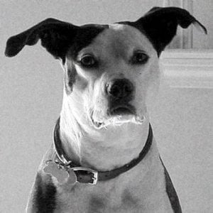 Profile picture for SevenDog