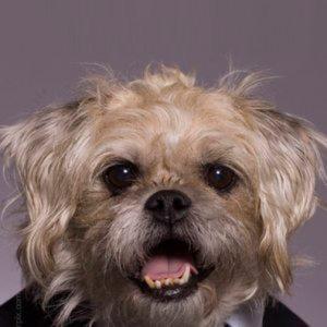 Profile picture for Brad Rudacille