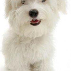 Profile picture for susan whitman