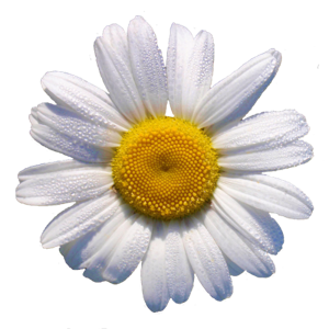 Profile picture for Charlotte Daisy