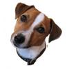 Stamper Dog
