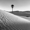 Palmeraie et désert
