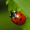 AwesomeLadybug