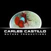 Carles Castillo HD