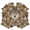 23 Wolves