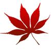 Red Leaf Film
